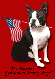 Boston Terrier Club of Oklahoma City